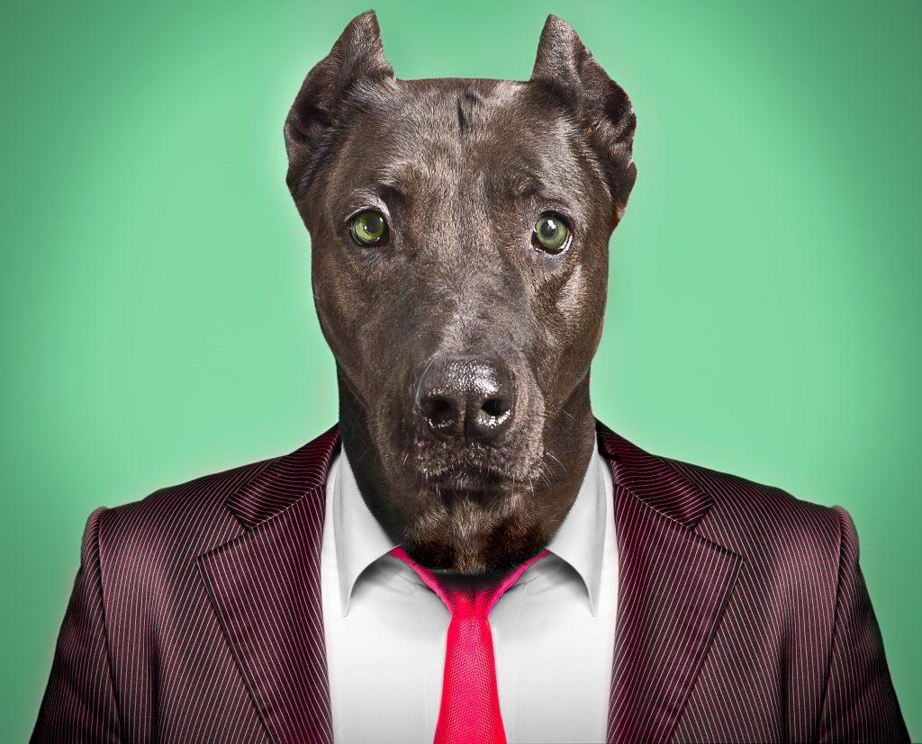 Dressed-Dog-1024x827.jpeg